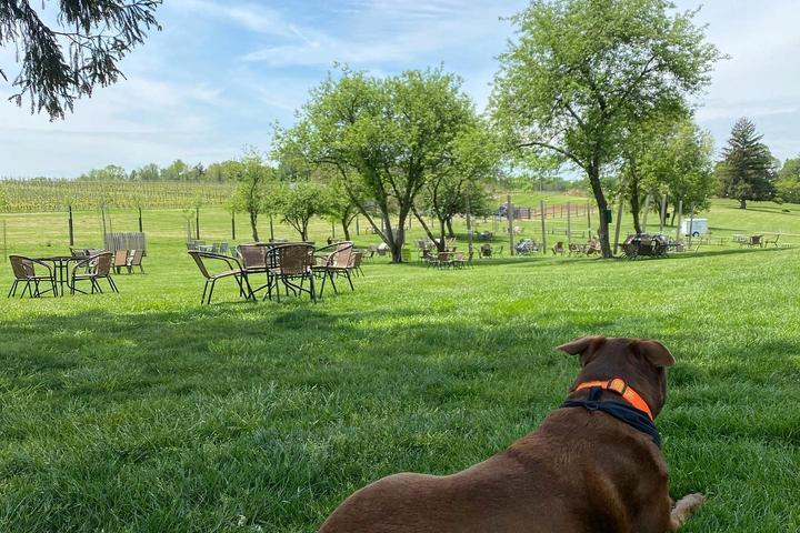 Pet Friendly Penns Woods Winery