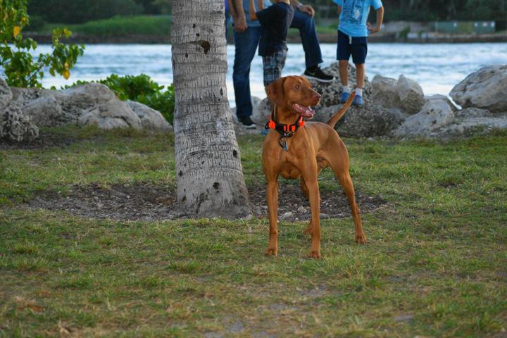 Pet Friendly South Pointe Park