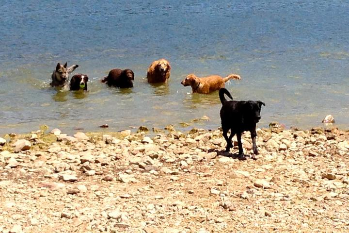 Pet Friendly Boathouse Dog Beach