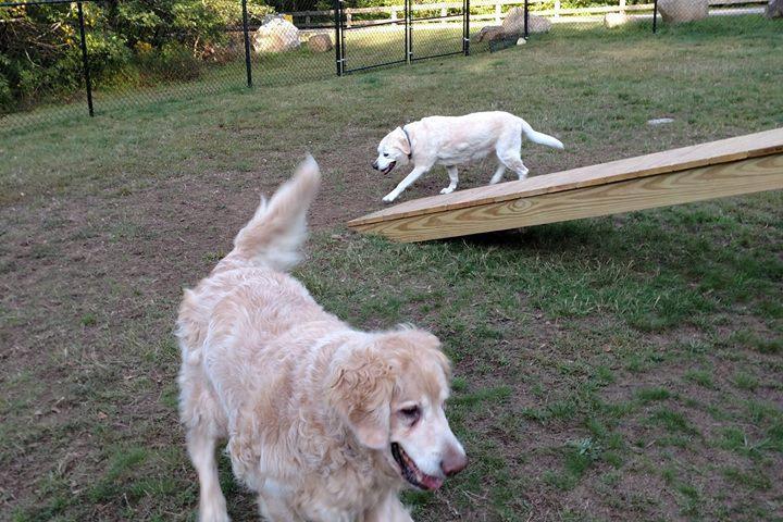 Pet Friendly Dartmouth Dog Park