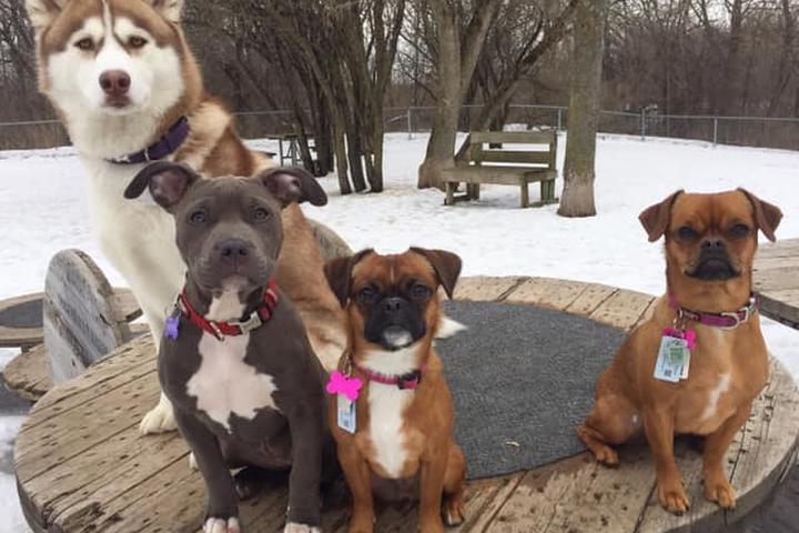 Pet Friendly Brockville Off-Leash Dog Park