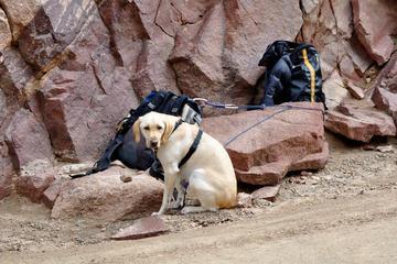 Pet Friendly Eldorado Canyon State Park