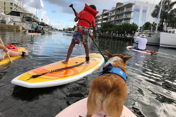 Pet Friendly SUP PUP Kids Paddleboard Tour