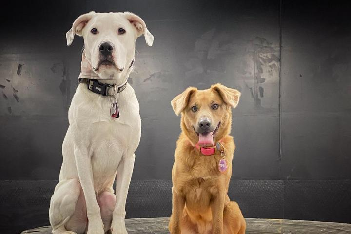 Pet Friendly Ales and Tails - Indoor Dog Park & Taproom