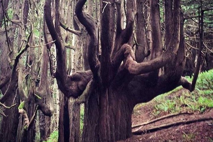 Pet Friendly Humboldt Redwoods State Park