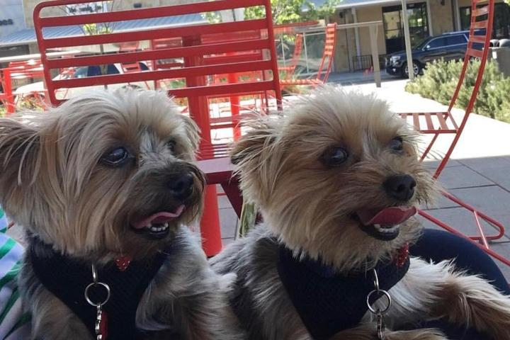 Pet Friendly Hill Country Galleria