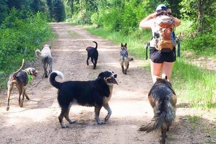 Pet Friendly Dog Training on a Hike and at the Beach