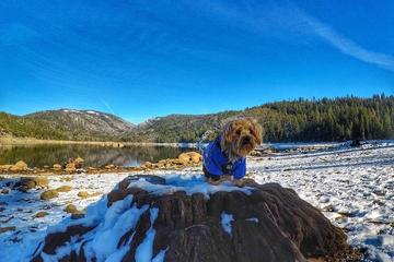 Pet Friendly Stanislaus National Forest