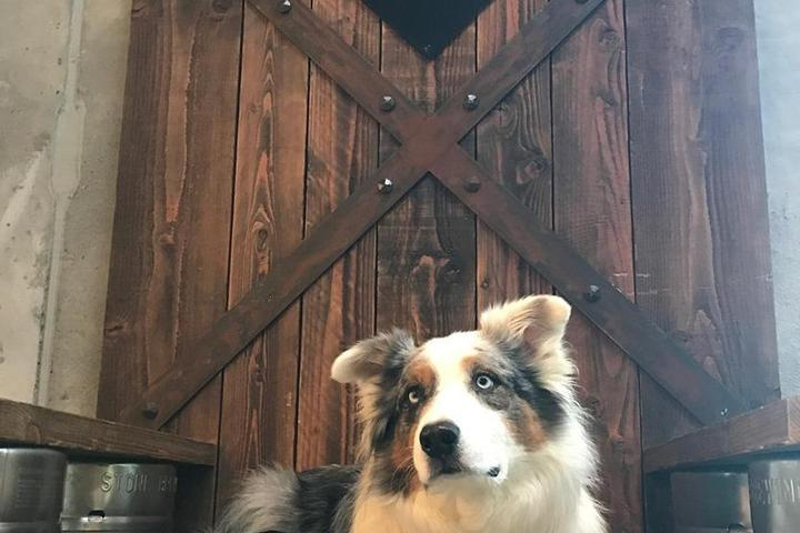 Pet Friendly Stone Brewing Taproom
