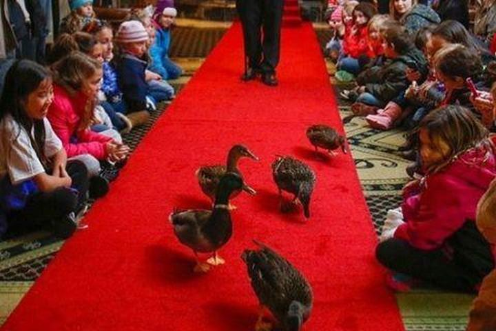 Pet Friendly Peabody Duck March at The Peabody Memphis Hotel