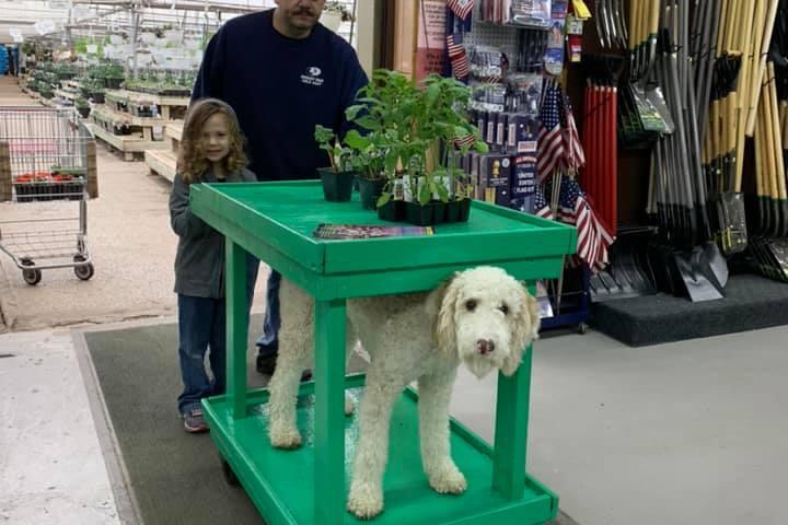 Pet Friendly Cox's Plant Farm