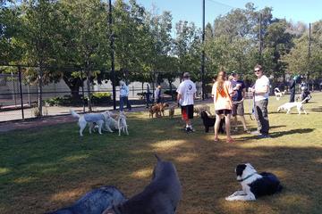 Pet Friendly Nealon Dog Park