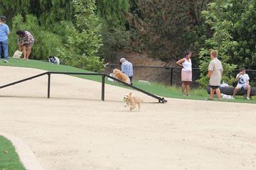 Pet Friendly Olive Hills Dog Park