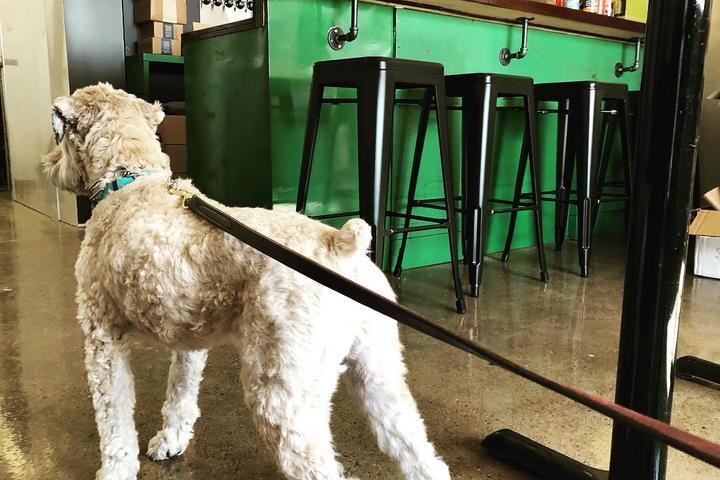 Pet Friendly Patron Saints Brewery