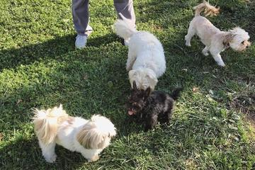 Pet Friendly Green Valley Forest Preserve Dog Park