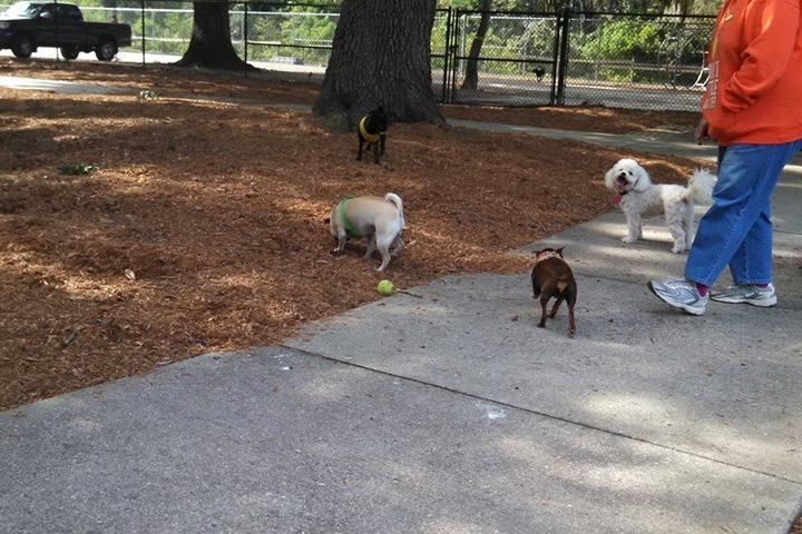 Pet Friendly West Orange Soccer Park