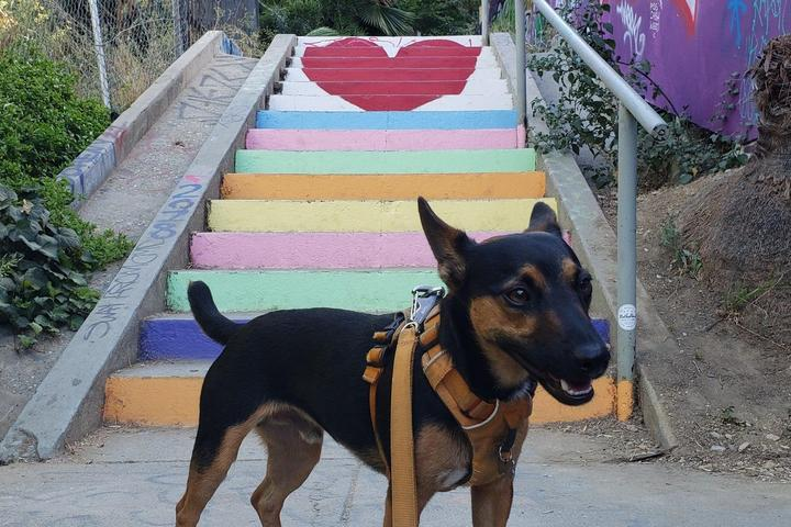 Pet Friendly LA's Secret Painted Stairs