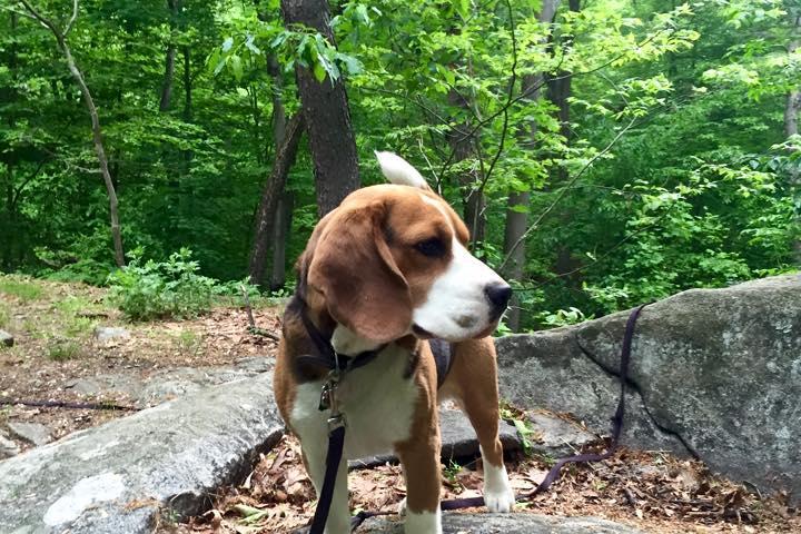 Pet Friendly Graham Hills Park Trail