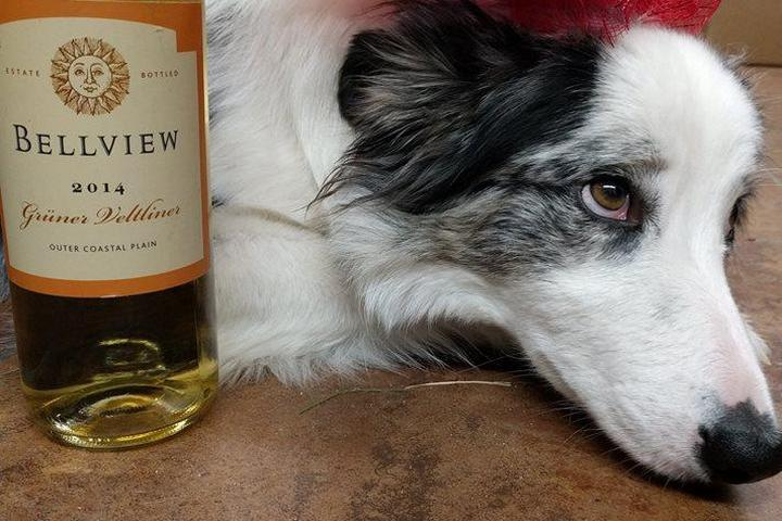 Pet Friendly Bellview Winery