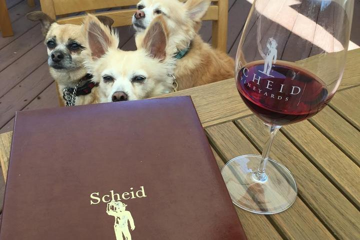 Pet Friendly Scheid Vineyards, Carmel Tasting Room