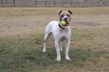 Pet Friendly Cheyenne Community Nancy Mockler Dog Park