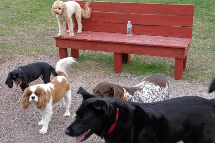 Pet Friendly City of Rome Bark Park