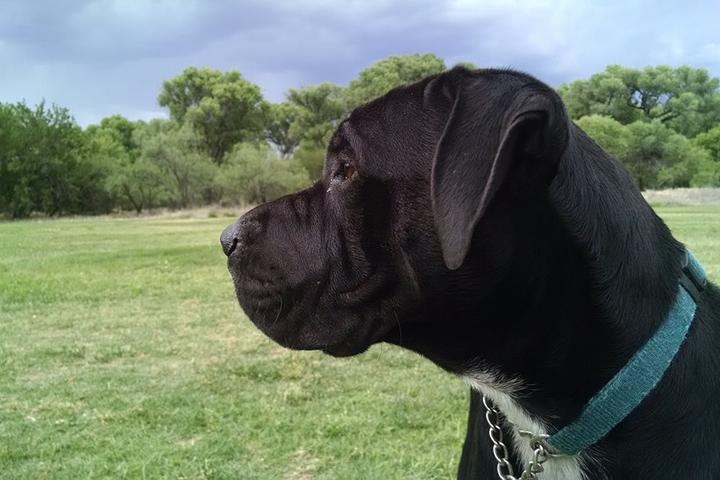 Pet Friendly Cottonwood Dog Park at Riverfront Park