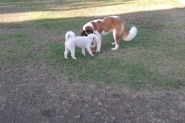Pet Friendly Drigon Dog Park