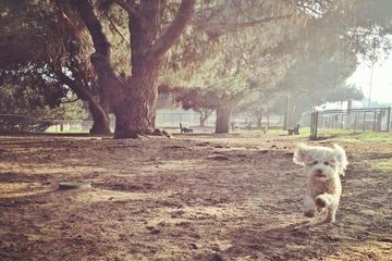 Pet Friendly El Segundo Dog Park