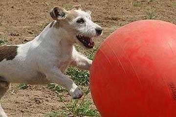 Pet Friendly Fort Bragg Dog Park
