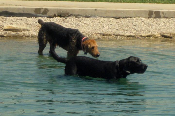 Pet Friendly Fort Thomas Dog Park at Highland Hills Park