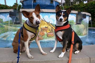 Pet Friendly Fountain Park At Playa Vista