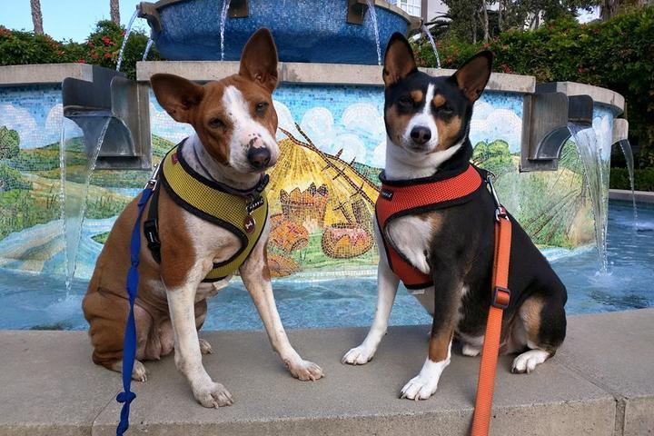 Pet Friendly Fountain Park At Playa Vista