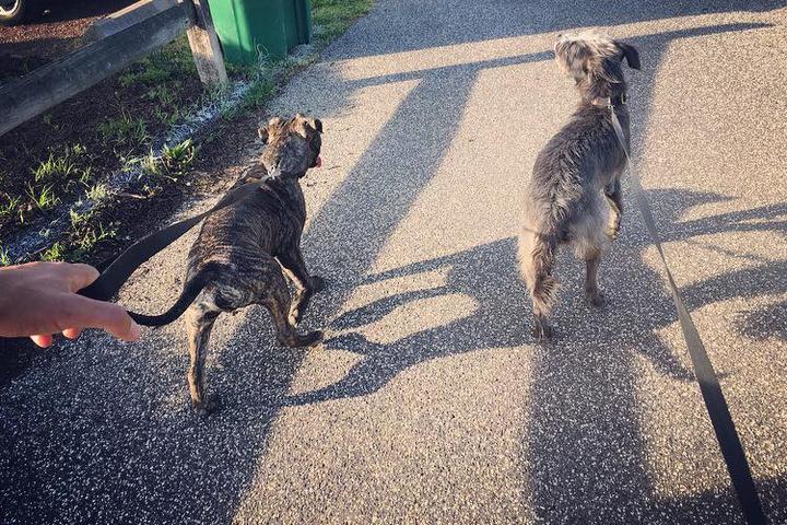 Pet Friendly Duke's Dog Run at Freedom Park