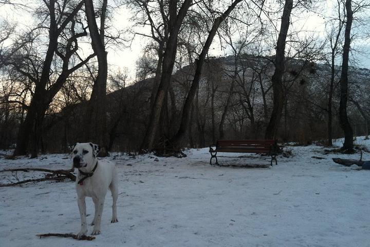 Pet Friendly Dog Park at Tony Grampsas