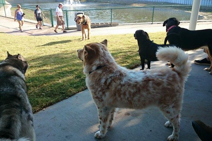 Pet Friendly Paws Park in Wingate Park