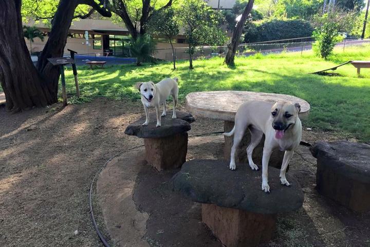Pet Friendly Centennial Trail