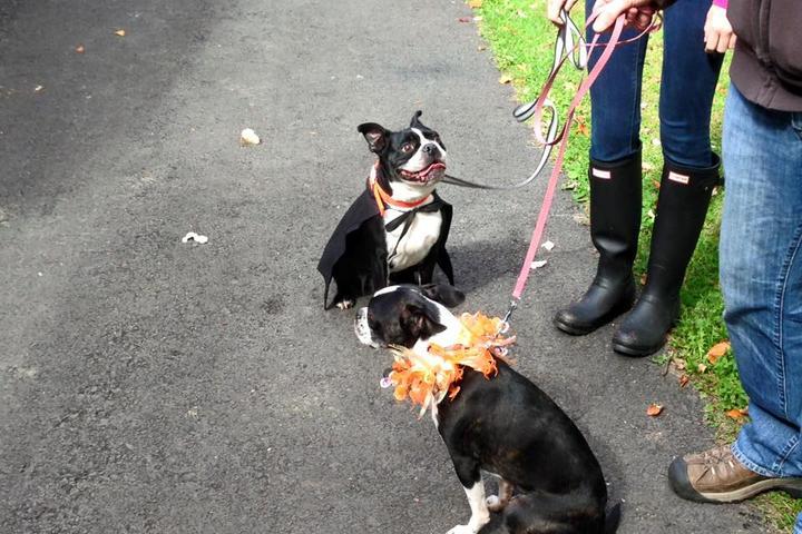 Pet Friendly Horsham Dog Park at Kohler Park