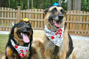 Pet Friendly Lake Carolina Dog Park