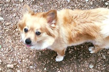 Pet Friendly Lakeway City Dog Park