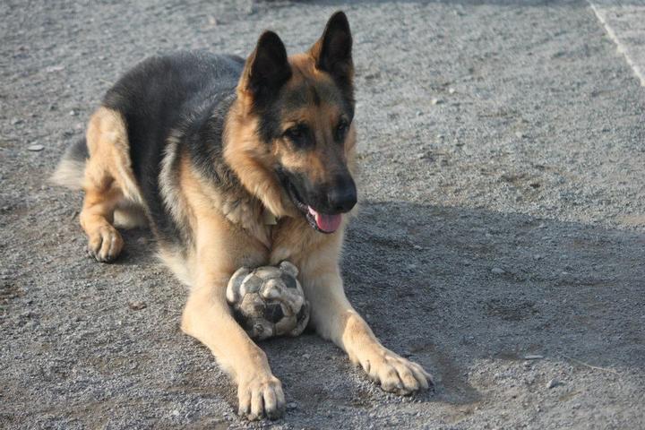 Pet Friendly Salem Dog Park