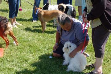 Pet Friendly Long Valley Dog Park