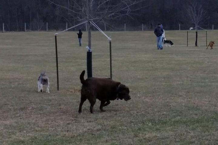 Pet Friendly Lyon Oaks Dog Park