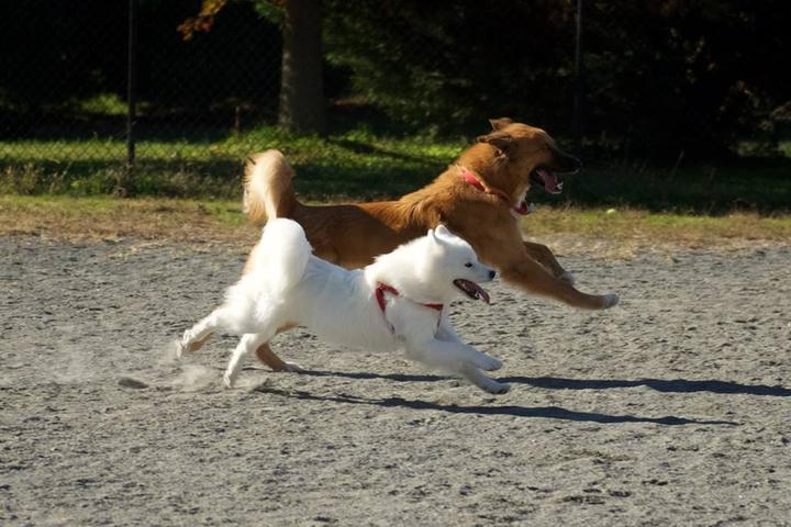 Pet Friendly Mason District Dog Park