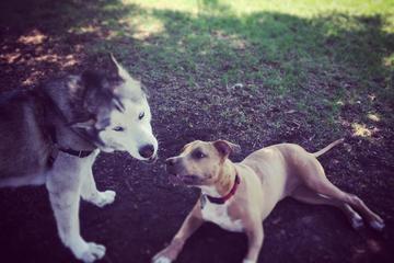 Pet Friendly Manteca Dog Park