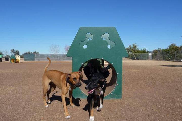 Pet Friendly Snedigar Sportsplex Dog Park