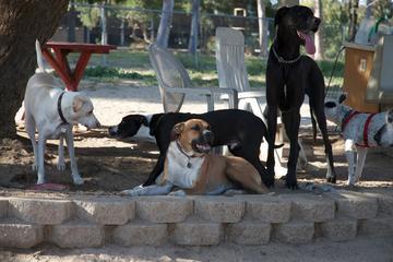 Pet Friendly Canine Corners Dog Park at Harry Griffen Park