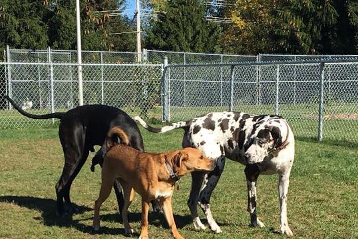 Pet Friendly Parc Canin Victoria