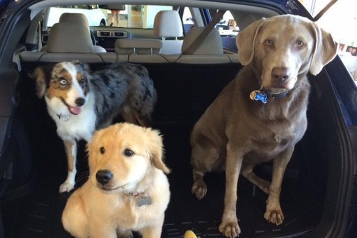 Pet Friendly Electric Dusk Drive-In