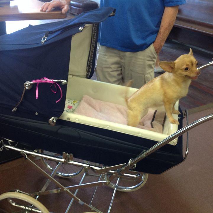 Chandler Dog Boarding Kennels